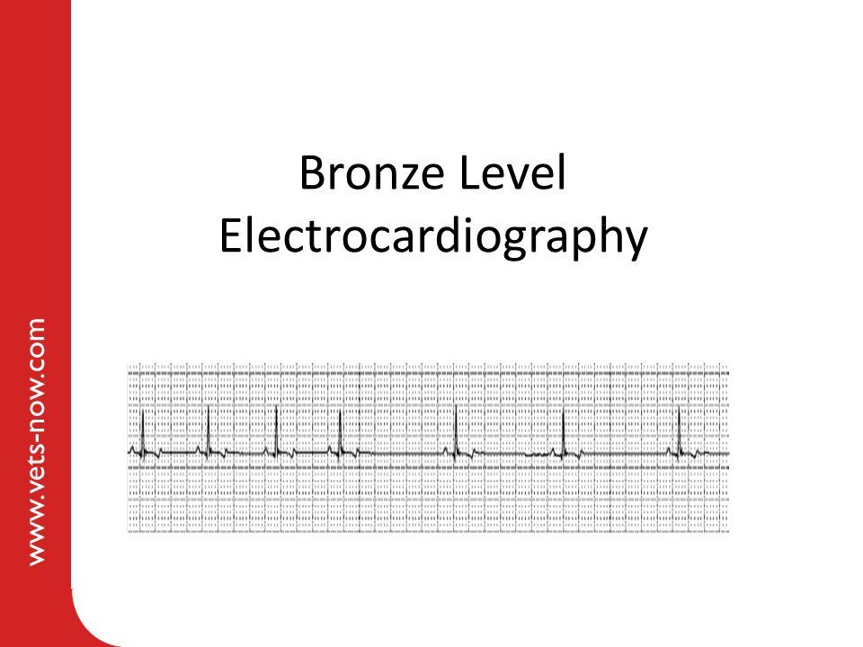 www.vets-now.com Bronze Level Electrocardiography