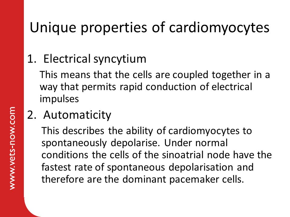 www.vets-now.com Unique properties of cardiomyocytes 1.Electrical syncytium This means that the cells are coupled together in a way that permits rapid