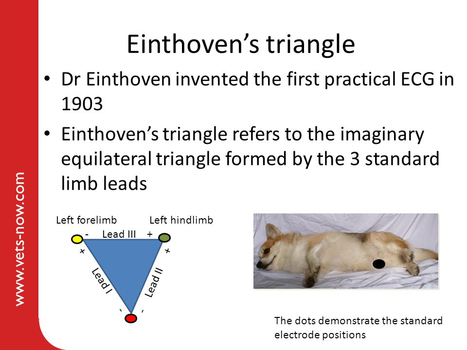 www.vets-now.com Einthoven's triangle Dr Einthoven invented the first practical ECG in 1903 Einthoven's triangle refers to the imaginary equilateral t