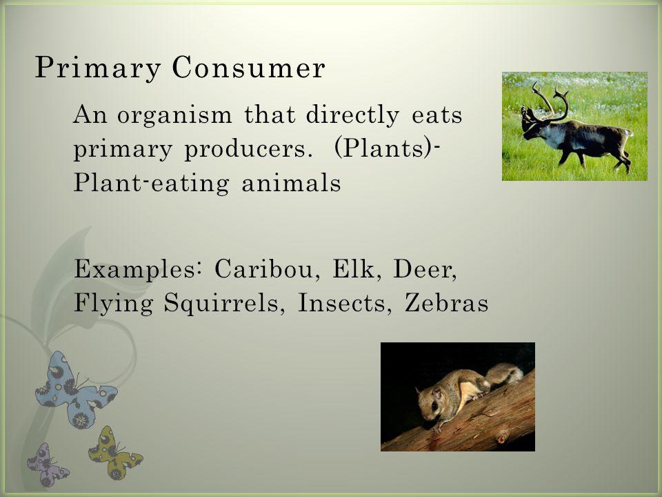 Primary Consumer