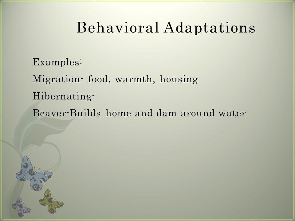 Behavioral Adaptations