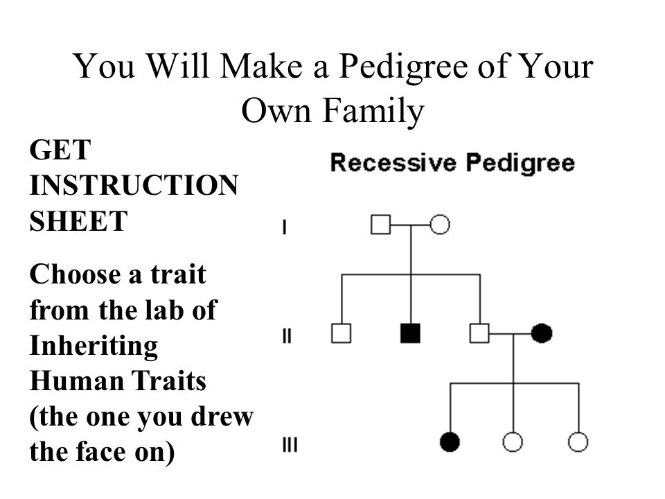 You Will Make a Pedigree of Your Own Family GET INSTRUCTION SHEET Choose a trait from the lab of Inheriting Human Traits (the one you drew the face on