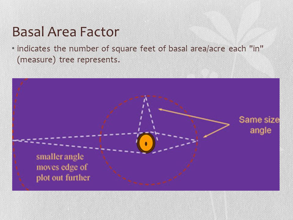 Basal Area Factor (BAF) Each sample tree, regardless of DBH, represents the same basal area per acre for a given critical angle.