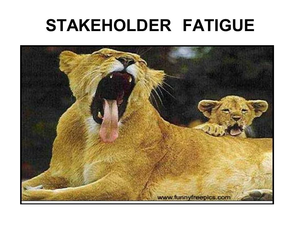 STAKEHOLDER FATIGUE