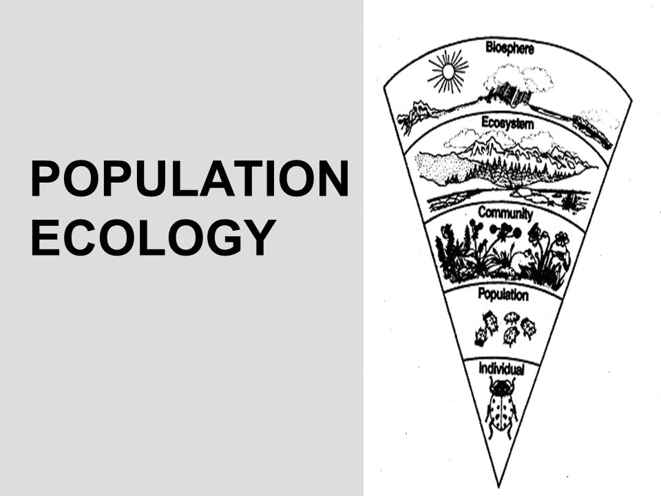 YOU MUST KNOW… HOW DENSITY, DISPERSION, AND DEMOGRAPHICS CAN DESCRIBE A POPULATION THE DIFFERENCES BETWEEN EXPONENTIAL AND LOGISTIC MODELS OF POPULATION GROWTH HOW DENSITY-DEPENDENT AND DENSITY-INDEPENDENT FACTORS CAN CONTROL POPULATION GROWTH