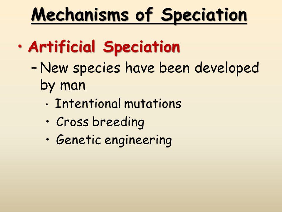 Mechanisms of Speciation Artificial SpeciationArtificial Speciation –New species have been developed by man Intentional mutations Cross breeding Genetic engineering
