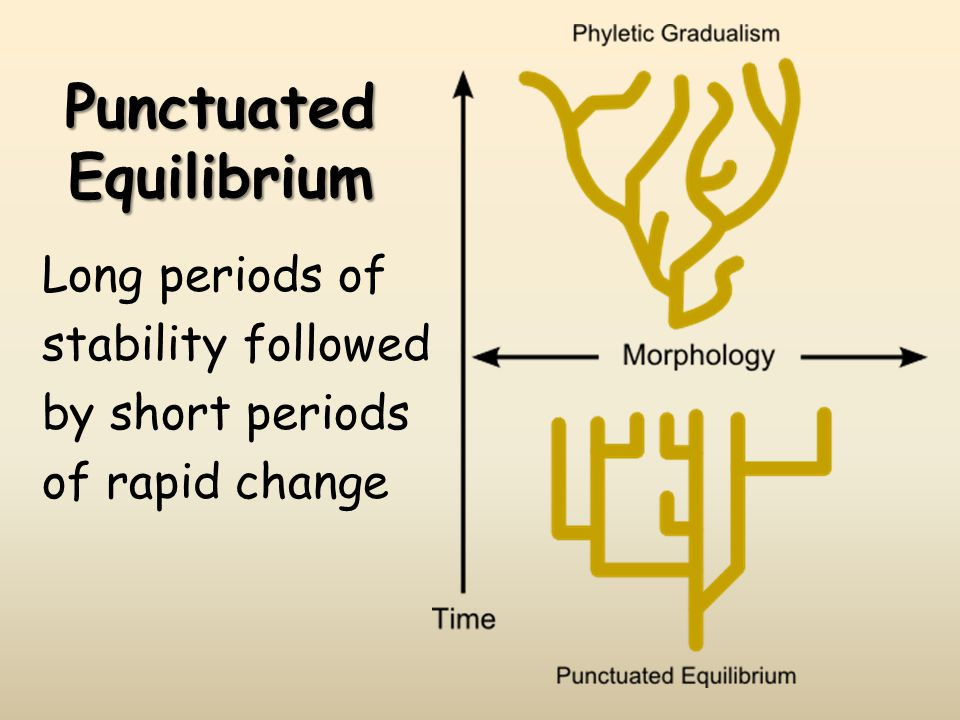 Punctuated Equilibrium Long periods of stability followed by short periods of rapid change