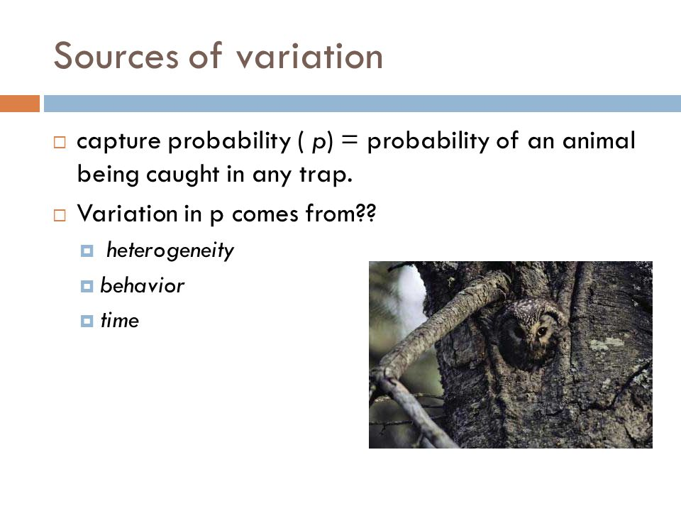 Sources of variation  capture probability ( p) = probability of an animal being caught in any trap.  Variation in p comes from??  heterogeneity  b