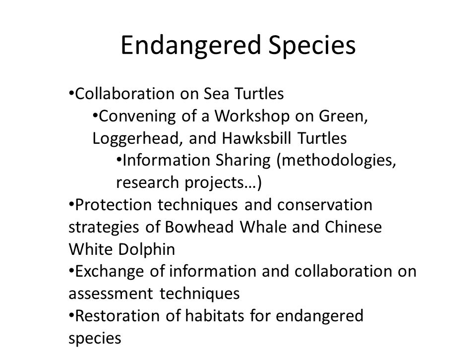 Endangered Species Collaboration on Sea Turtles Convening of a Workshop on Green, Loggerhead, and Hawksbill Turtles Information Sharing (methodologies, research projects…) Protection techniques and conservation strategies of Bowhead Whale and Chinese White Dolphin Exchange of information and collaboration on assessment techniques Restoration of habitats for endangered species