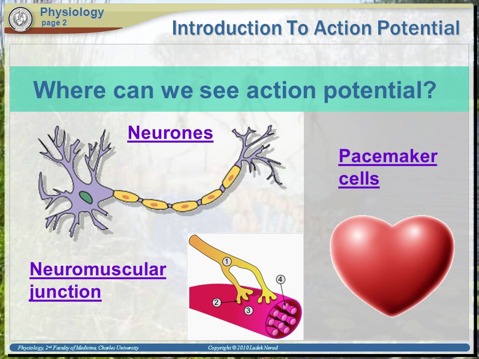 Physiology, 2 nd Faculty of Medicine, Charles University Copyright © 2010 Ludek Nerad Introduction To Action Potential Physiology page 2 Where can we