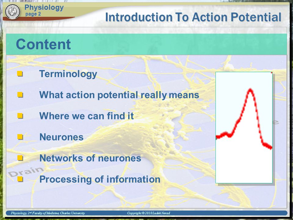 Physiology, 2 nd Faculty of Medicine, Charles University Copyright © 2010 Ludek Nerad Introduction To Action Potential Physiology page 2 Content Termi