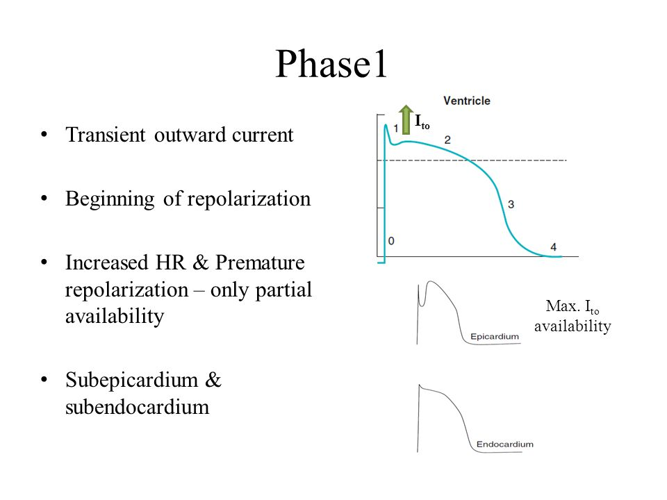 Phase1 Transient outward current Beginning of repolarization Increased HR & Premature repolarization – only partial availability Subepicardium & suben