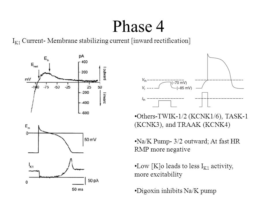 Phase 4 I K1 Current- Membrane stabilizing current [inward rectification] Others-TWIK-1/2 (KCNK1/6), TASK-1 (KCNK3), and TRAAK (KCNK4) Na/K Pump- 3/2
