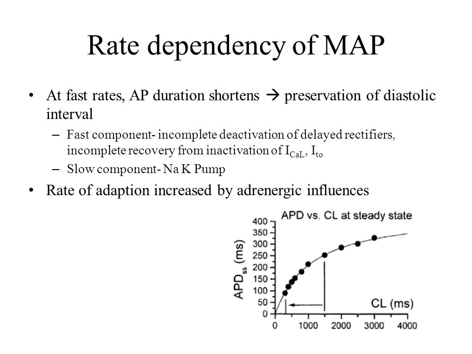 Rate dependency of MAP At fast rates, AP duration shortens  preservation of diastolic interval – Fast component- incomplete deactivation of delayed r