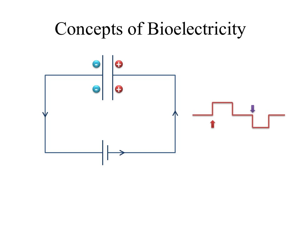 Concepts of Bioelectricity + + + + - - - -