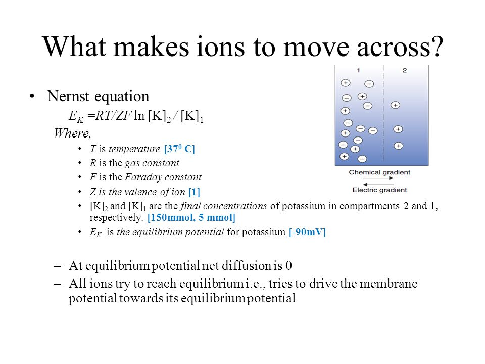 What makes ions to move across.