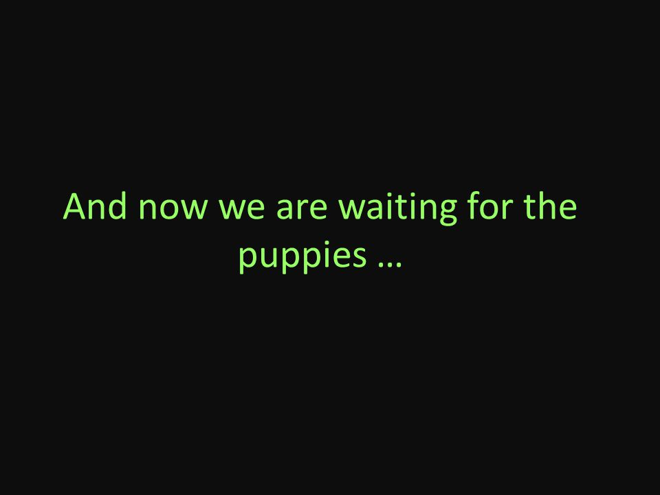 And now we are waiting for the puppies …