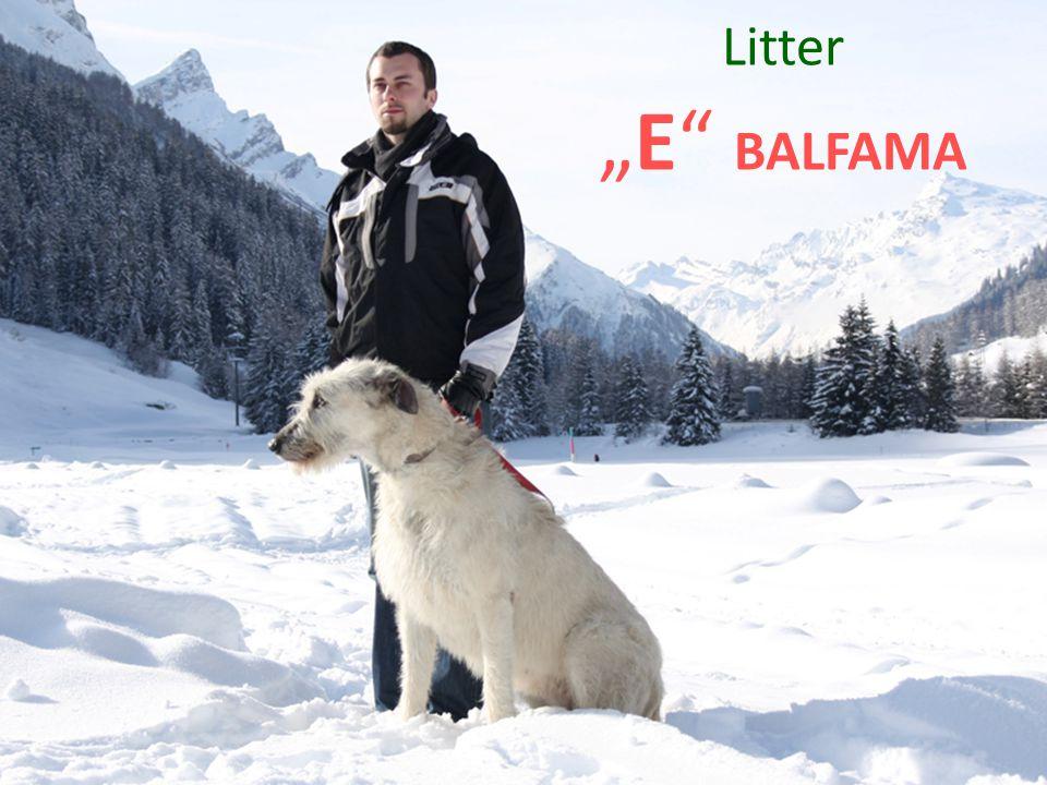 """Litter """"E BALFAMA"""