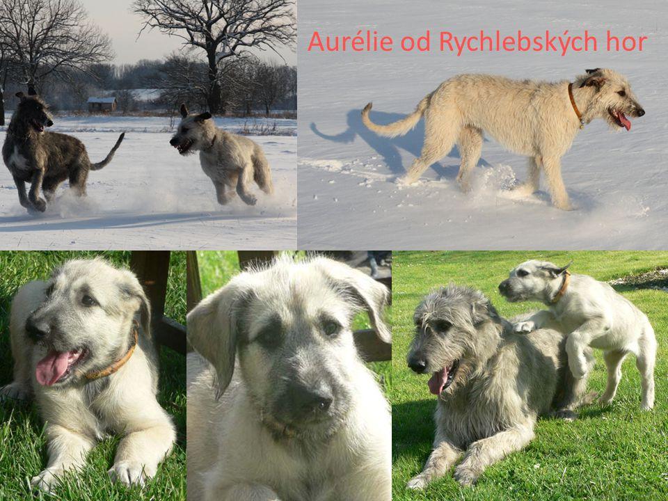 Aurélie od Rychlebských hor