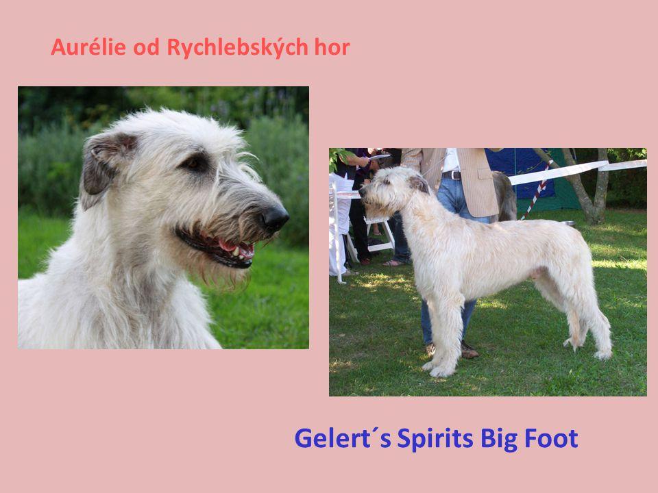 Aurélie od Rychlebských hor Gelert´s Spirits Big Foot