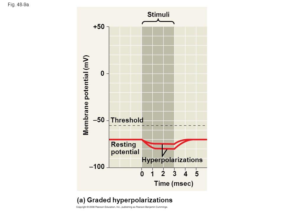 Fig. 48-9a Stimuli +50 Membrane potential (mV) –50 Threshold Resting potential Hyperpolarizations –100 0 23 4 Time (msec) (a) Graded hyperpolarization