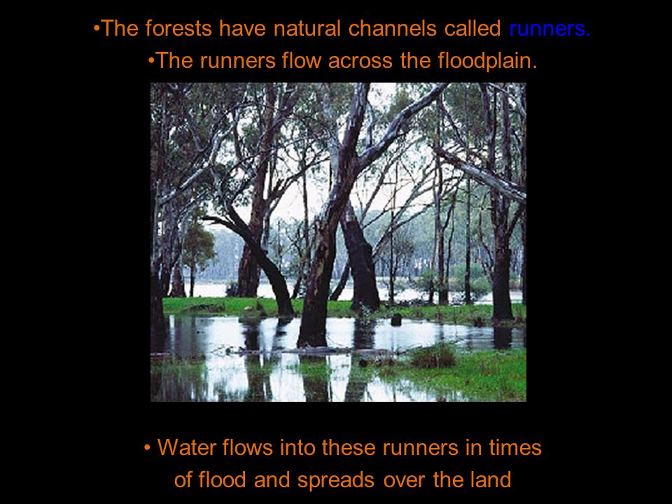 The forests have natural channels called runners. The runners flow across the floodplain.