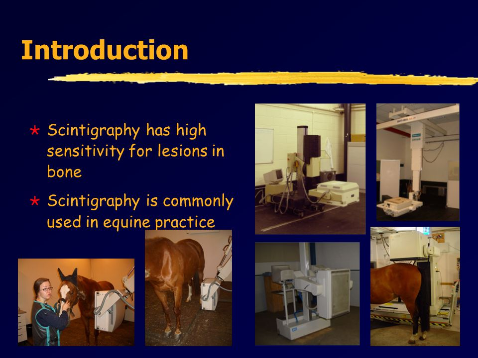 Introduction  Scintigraphy has high sensitivity for lesions in bone  Scintigraphy is commonly used in equine practice