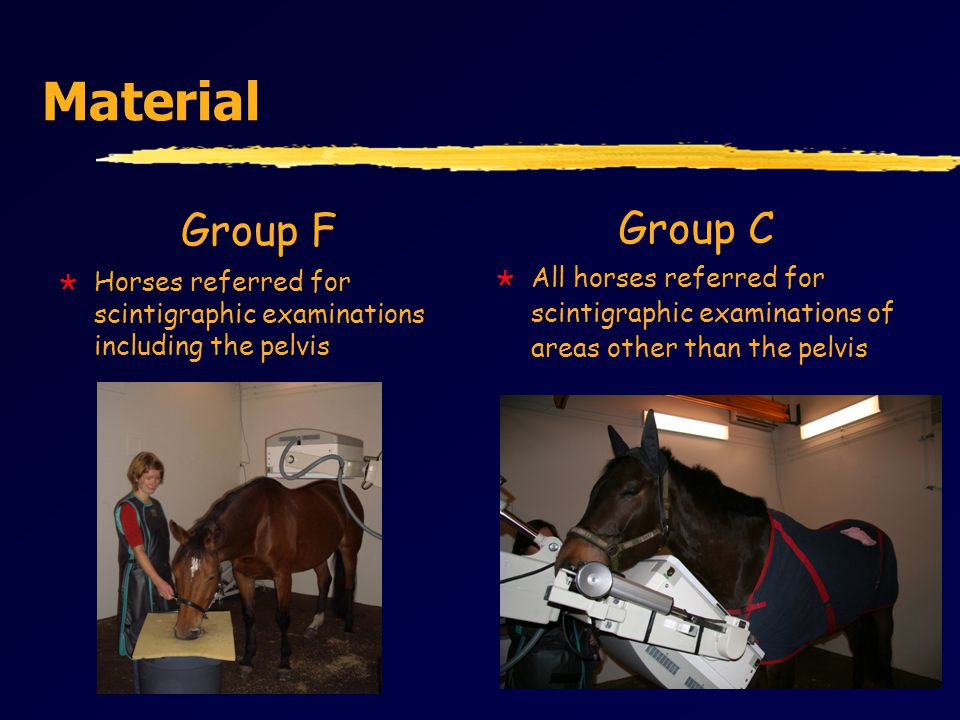 Material Group F  Horses referred for scintigraphic examinations including the pelvis Group C  All horses referred for scintigraphic examinations of areas other than the pelvis