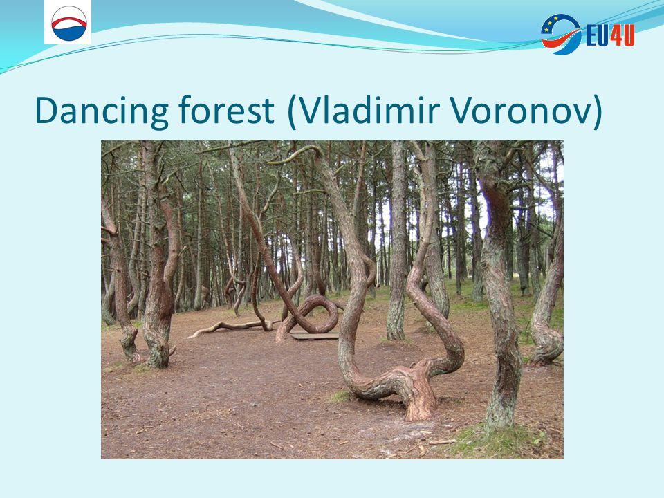 Dancing forest (Vladimir Voronov)