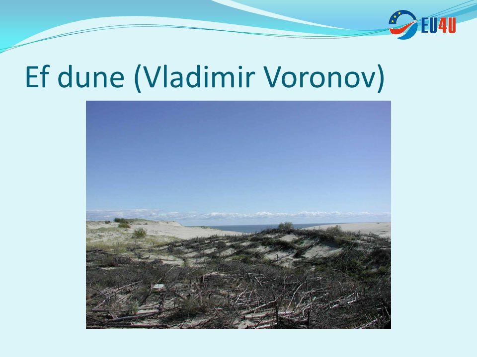 Ef dune (Vladimir Voronov)