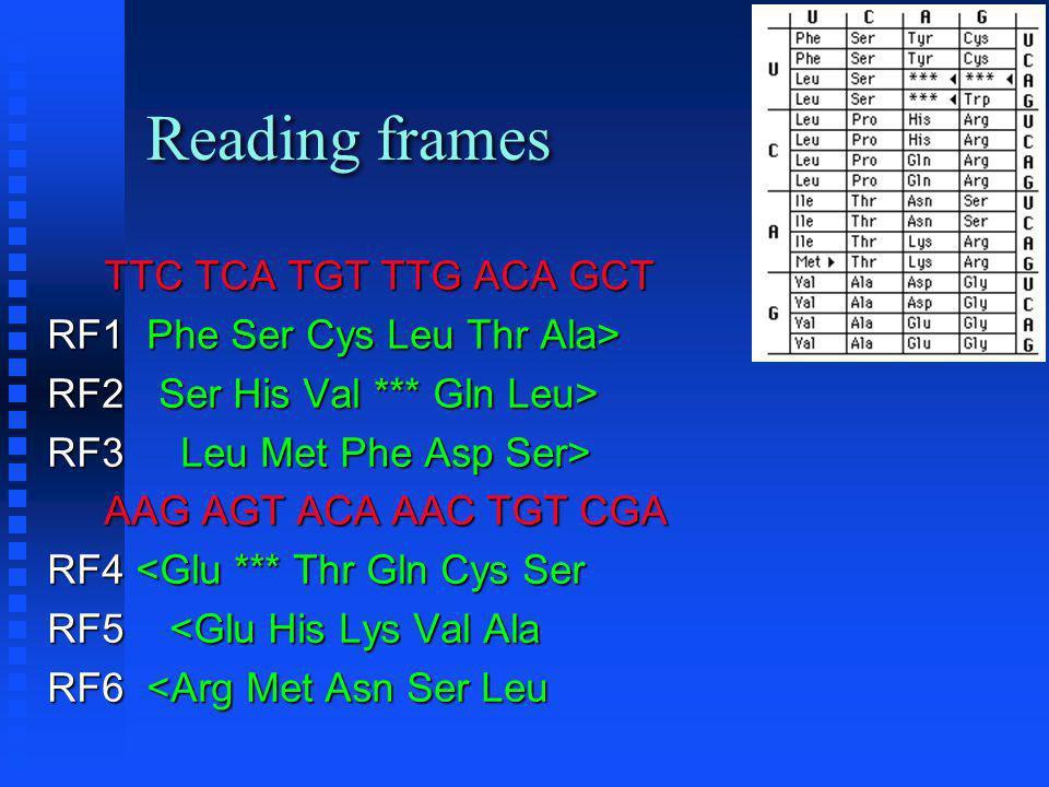 Reading frames TTC TCA TGT TTG ACA GCT TTC TCA TGT TTG ACA GCT RF1 Phe Ser Cys Leu Thr Ala> RF2 Ser His Val *** Gln Leu> RF3 Leu Met Phe Asp Ser> AAG AGT ACA AAC TGT CGA AAG AGT ACA AAC TGT CGA RF4 <Glu *** Thr Gln Cys Ser RF5 <Glu His Lys Val Ala RF6 <Arg Met Asn Ser Leu