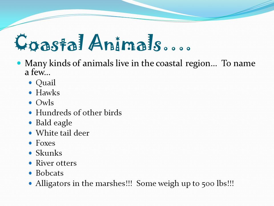 Coastal Animals…. Many kinds of animals live in the coastal region… To name a few… Quail Hawks Owls Hundreds of other birds Bald eagle White tail deer