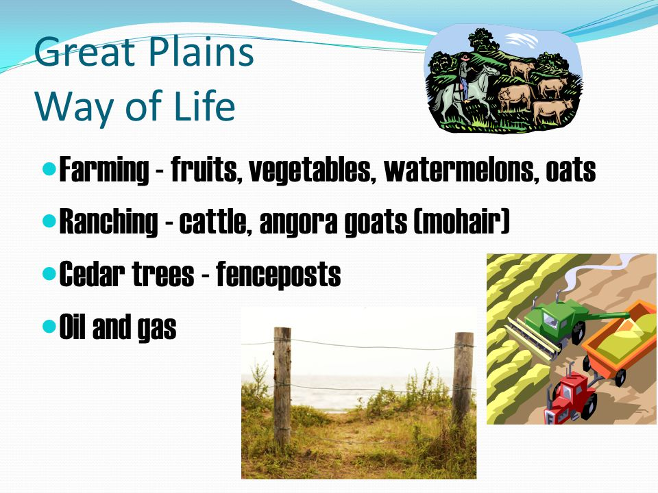 Great Plains Way of Life Farming - fruits, vegetables, watermelons, oats Ranching - cattle, angora goats (mohair) Cedar trees - fenceposts Oil and gas