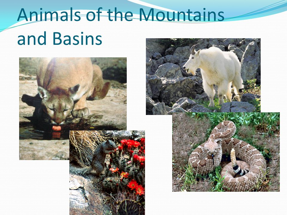 Animals of the Mountains and Basins