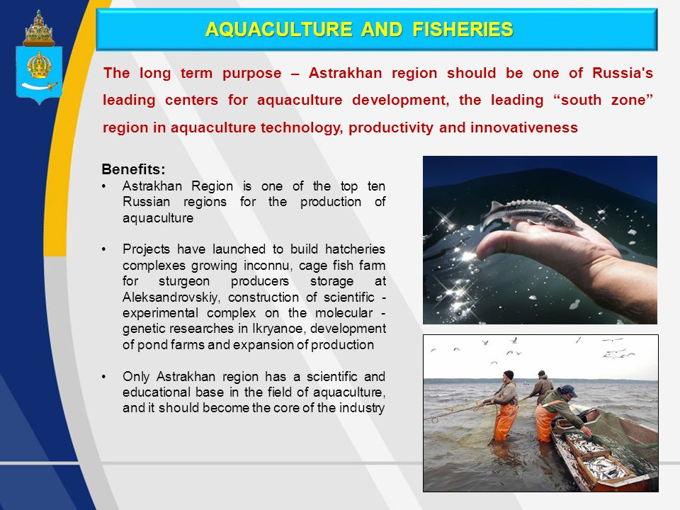 The long term purpose – Astrakhan region should be one of Russia s leading centers for aquaculture development, the leading south zone region in aquaculture technology, productivity and innovativeness Benefits: Astrakhan Region is one of the top ten Russian regions for the production of aquaculture Projects have launched to build hatcheries complexes growing inconnu, cage fish farm for sturgeon producers storage at Aleksandrovskiy, construction of scientific - experimental complex on the molecular - genetic researches in Ikryanoe, development of pond farms and expansion of production Only Astrakhan region has a scientific and educational base in the field of aquaculture, and it should become the core of the industry AQUACULTURE AND FISHERIES