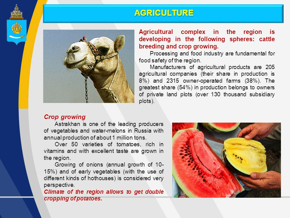 Agricultural complex in the region is developing in the following spheres: cattle breeding and crop growing.