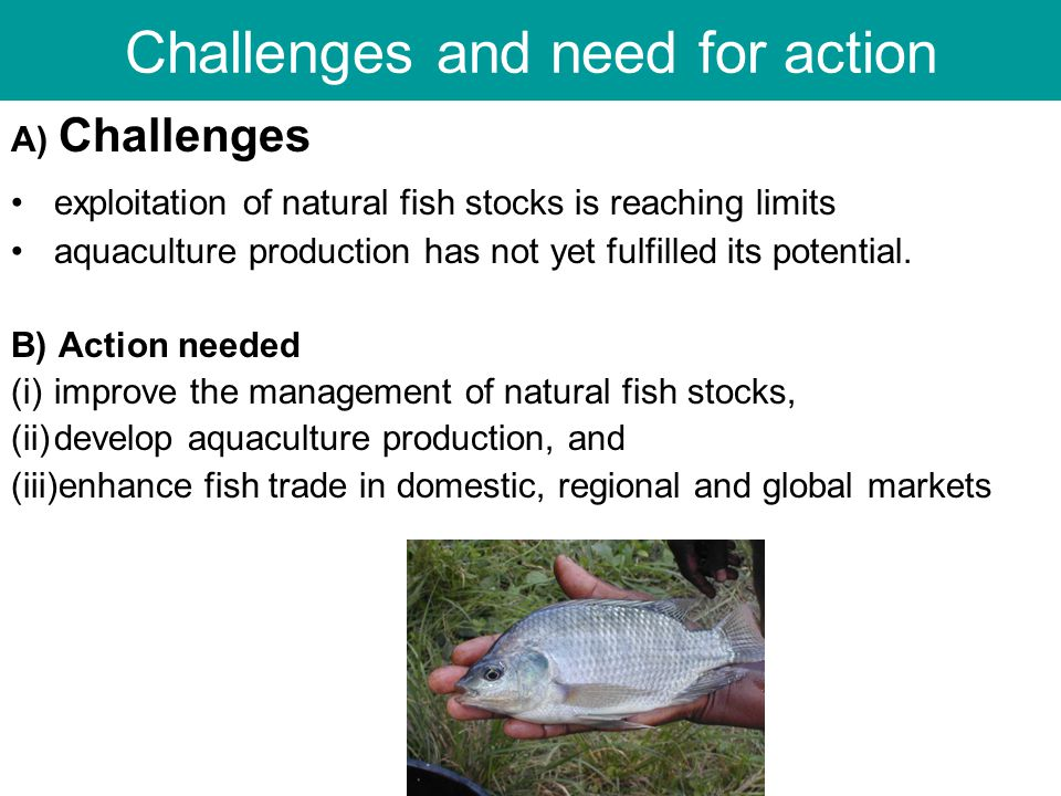 Challenges and need for action A) Challenges exploitation of natural fish stocks is reaching limits aquaculture production has not yet fulfilled its potential.