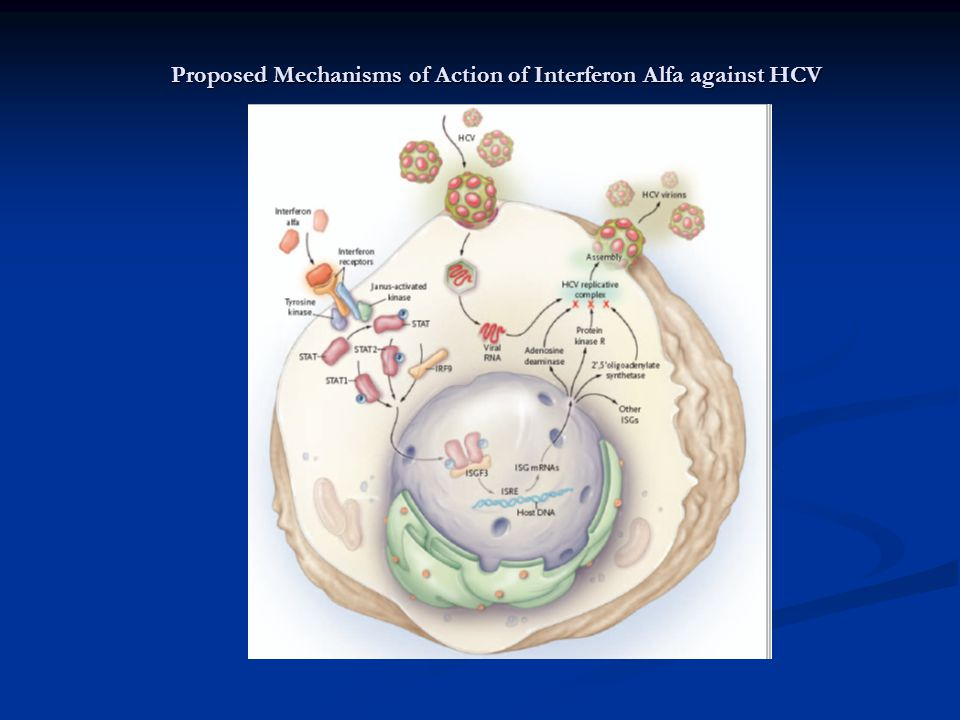 Proposed Mechanisms of Action of Interferon Alfa against HCV