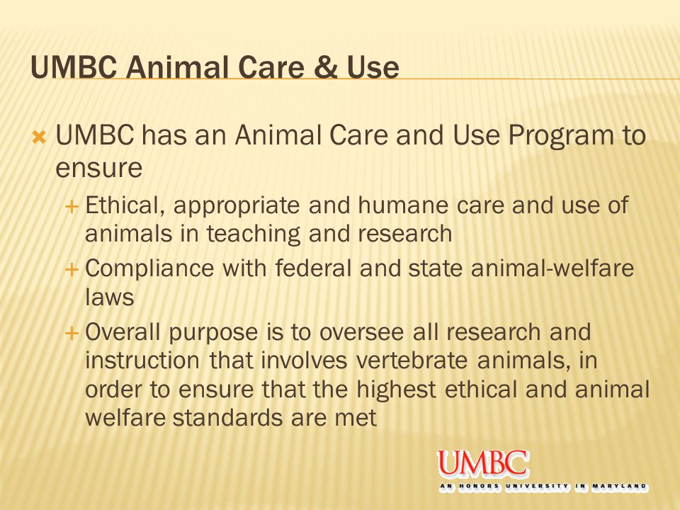 UMBC Animal Care & Use  UMBC has an Animal Care and Use Program to ensure  Ethical, appropriate and humane care and use of animals in teaching and research  Compliance with federal and state animal-welfare laws  Overall purpose is to oversee all research and instruction that involves vertebrate animals, in order to ensure that the highest ethical and animal welfare standards are met