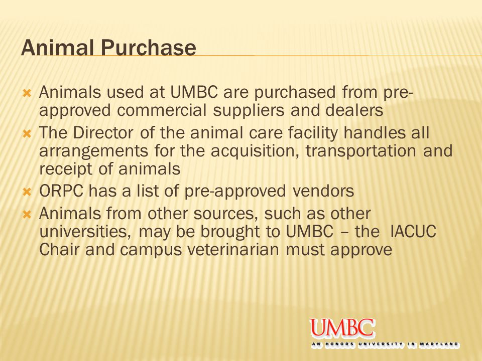 Animal Purchase  Animals used at UMBC are purchased from pre- approved commercial suppliers and dealers  The Director of the animal care facility handles all arrangements for the acquisition, transportation and receipt of animals  ORPC has a list of pre-approved vendors  Animals from other sources, such as other universities, may be brought to UMBC – the IACUC Chair and campus veterinarian must approve