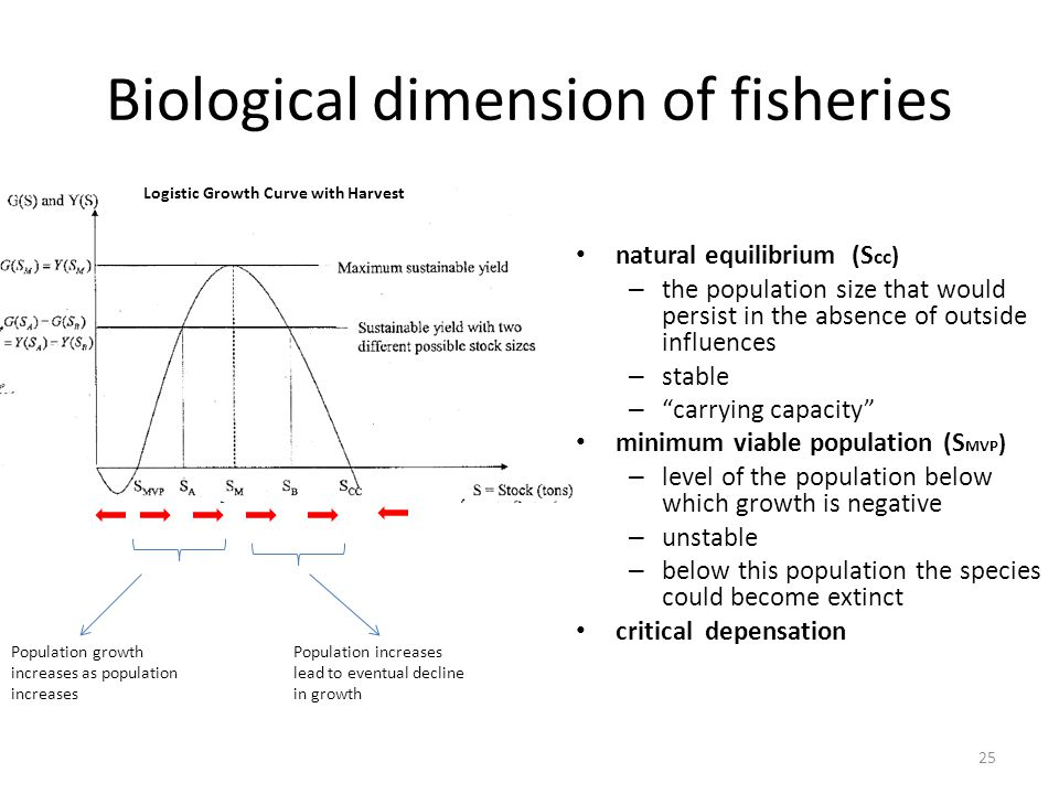 Biological dimension of fisheries natural equilibrium (S cc ) – the population size that would persist in the absence of outside influences – stable – carrying capacity minimum viable population (S MVP ) – level of the population below which growth is negative – unstable – below this population the species could become extinct critical depensation 25 Logistic Growth Curve with Harvest Population growth increases as population increases Population increases lead to eventual decline in growth