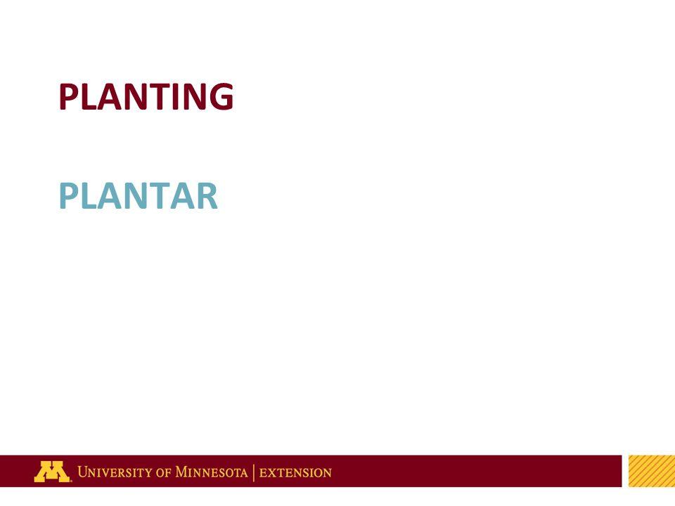 45 PLANTING PLANTAR