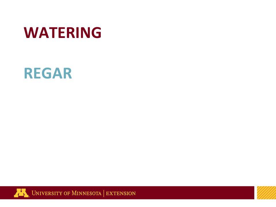 57 WATERING REGAR
