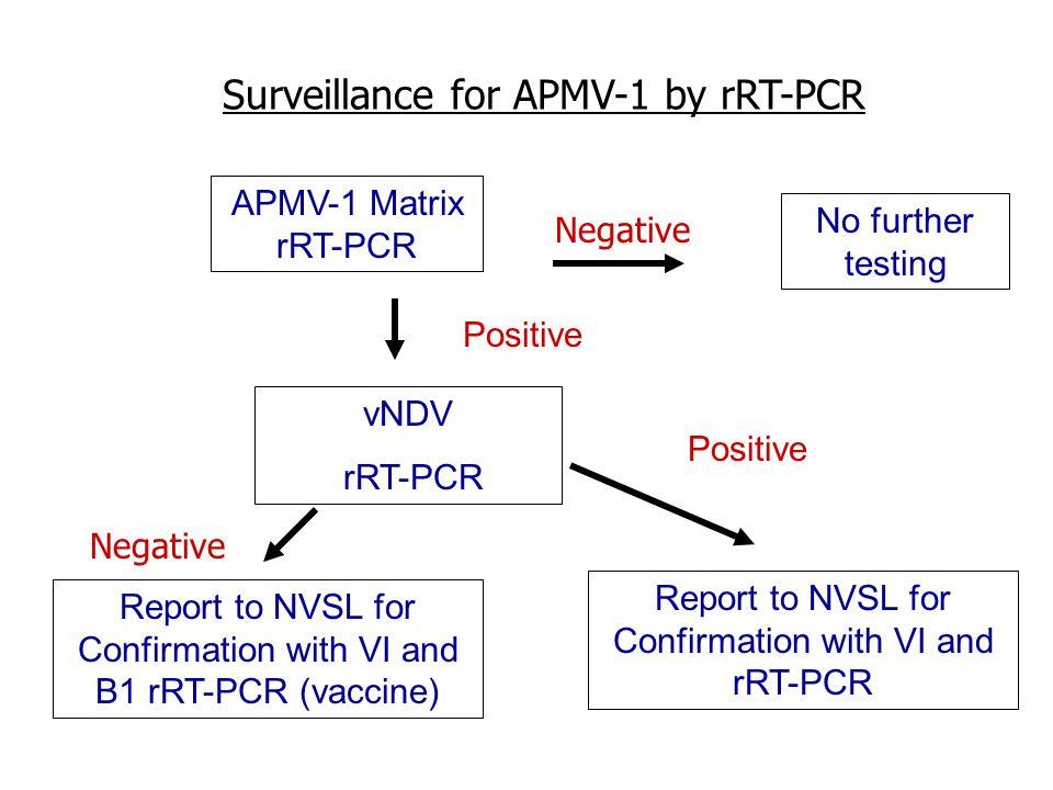 APMV-1 Matrix rRT-PCR vNDV rRT-PCR Positive No further testing Positive Report to NVSL for Confirmation with VI and B1 rRT-PCR (vaccine) Report to NVSL for Confirmation with VI and rRT-PCR Negative Surveillance for APMV-1 by rRT-PCR