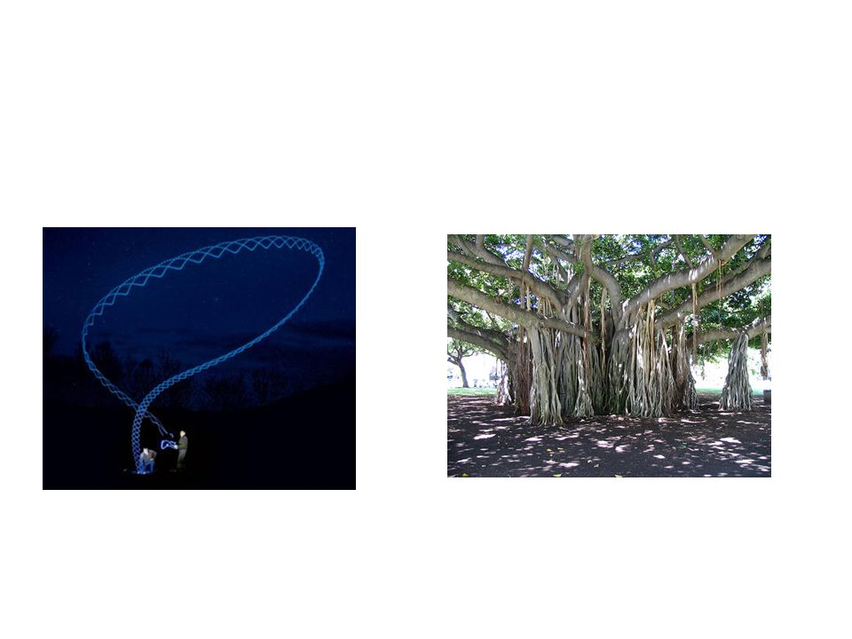The Banyan Approach to Human Rights Diffusion Appeal to cognitive priors.