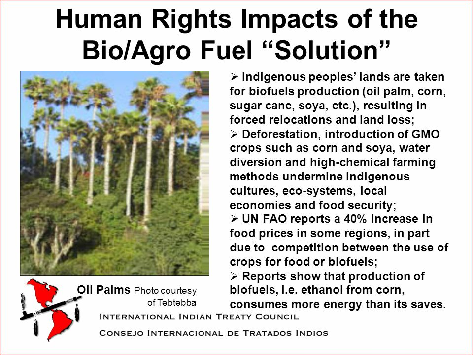 Human Rights Impacts of the Bio/Agro Fuel Solution Oil Palms Photo courtesy of Tebtebba  Indigenous peoples' lands are taken for biofuels production (oil palm, corn, sugar cane, soya, etc.), resulting in forced relocations and land loss;  Deforestation, introduction of GMO crops such as corn and soya, water diversion and high-chemical farming methods undermine Indigenous cultures, eco-systems, local economies and food security;  UN FAO reports a 40% increase in food prices in some regions, in part due to competition between the use of crops for food or biofuels;  Reports show that production of biofuels, i.e.