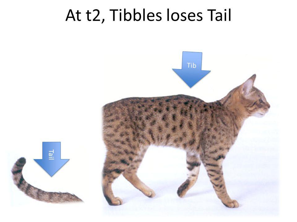 At t1, Tibbles consists of Tib and Tail Tib Tail