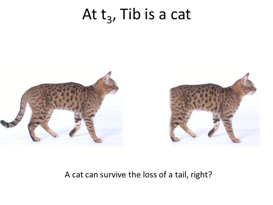 The Tibbles' Timeline t2t2 t1t1 t3t3