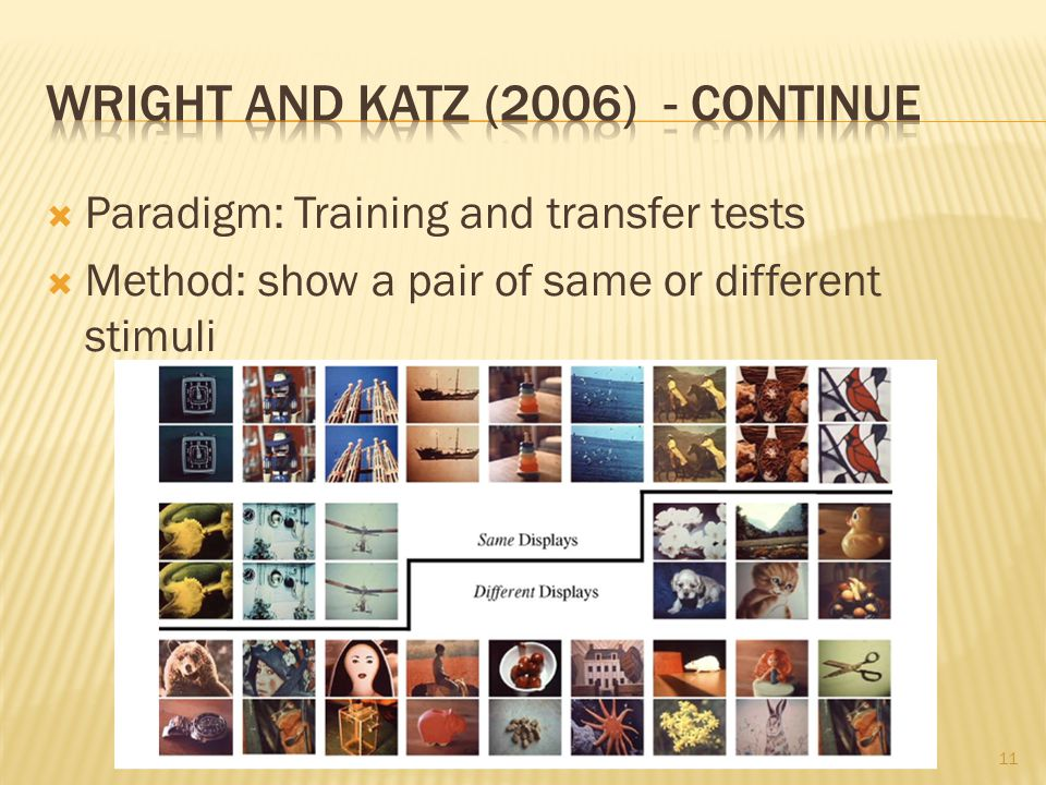  Paradigm: Training and transfer tests  Method: show a pair of same or different stimuli 11