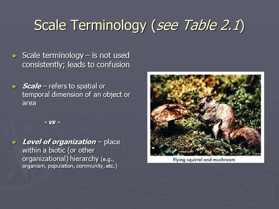 Scale concepts and hierarchy theory 3.